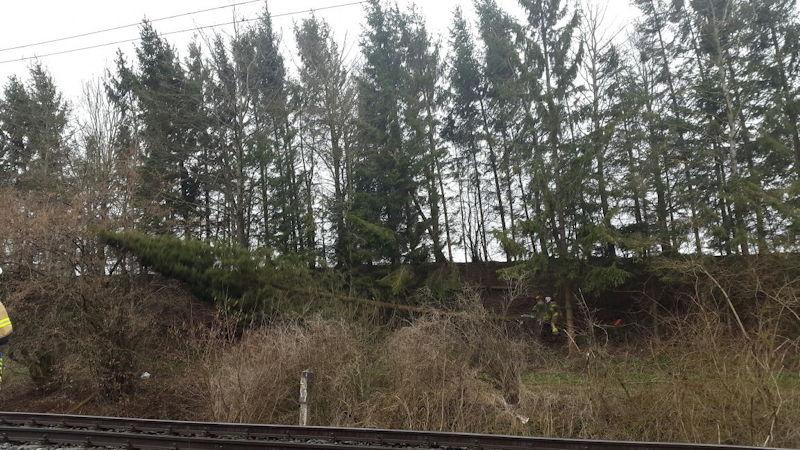 Den anhaltenden schweren Stürmen fielen viele Bäume zum Opfer. Foto: Feuerwehr Puchheim-Bhf.