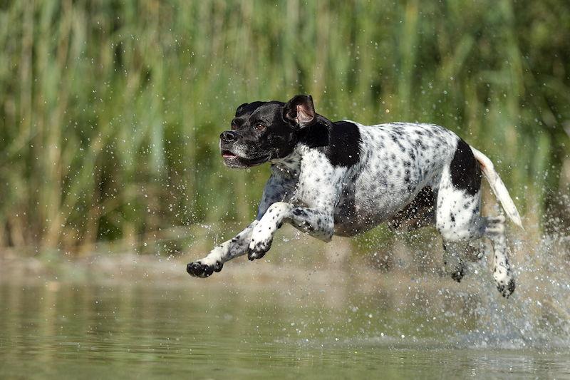 Ob Hunde weiterhin in den Böhmer Weiher springen dürfen ist fraglich. Foto: Steffi Obermayr, tierfot-os.de