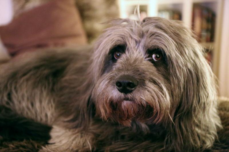 Hundesteuer bezahlt? Foto: A. Wilhelm