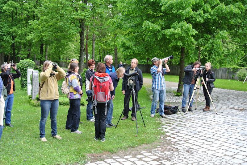 Die nächste Generation Krähen ist bereits gut zu beobachten. Die Anwohner sehen das eher mit Besorgnis, Foto: M. Limbacher