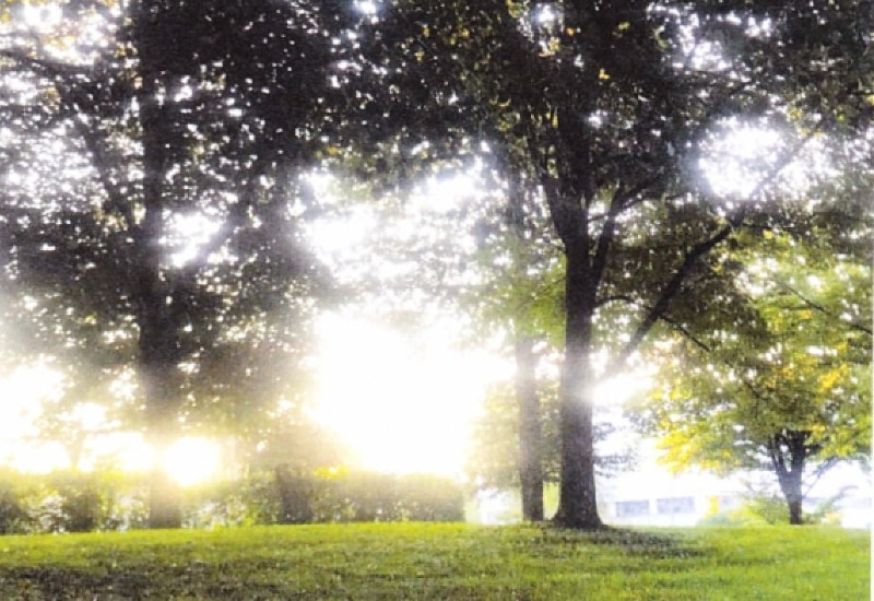 Bäume im Gegenlicht am Alois-Habeck-Platz