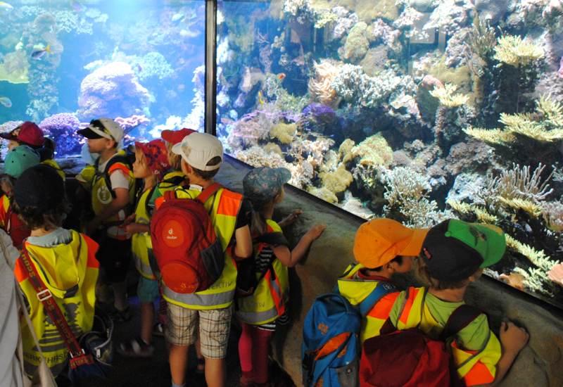 aquarium-kinder