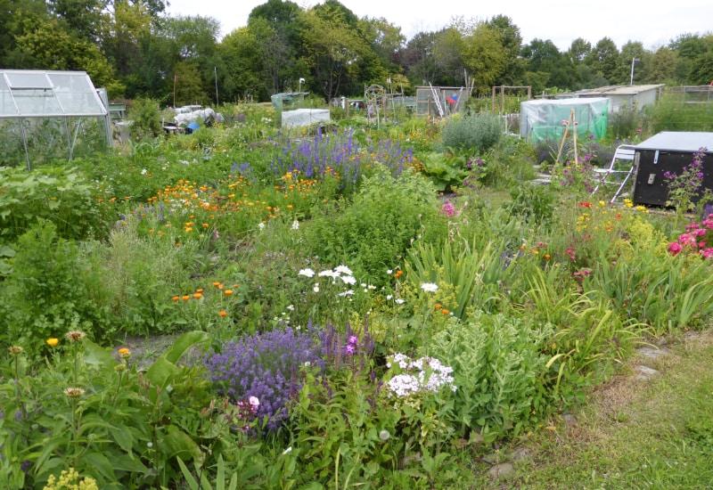 Puchheim bietet eine kostenlose ökologischen Gartenberatung an