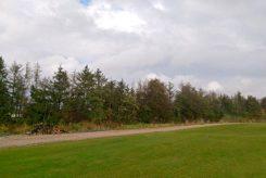 Baumfällungen entlang der Bahnlinie