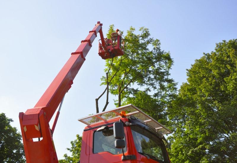 Die Grünen möchten den Baumbestand in Puchheim besser schützen Foto: zwiboe  / pixelio.de
