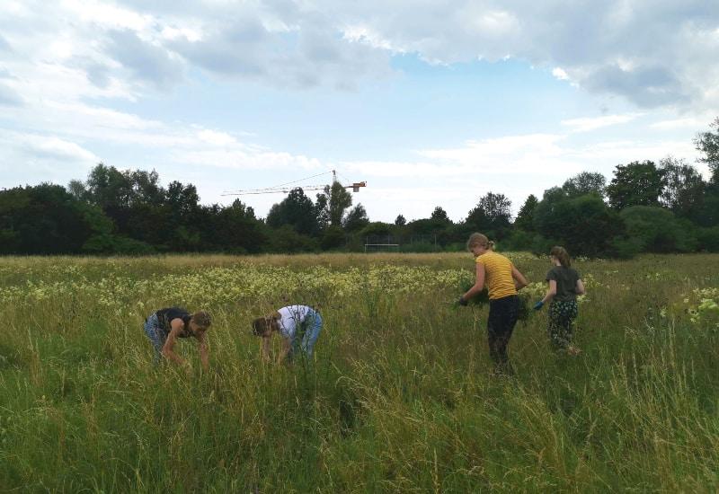 Die Umwelt AG des Gymnasiums Puchheim auf der Naturwiese