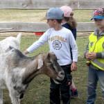 kindergarten-gut-aiderbichl