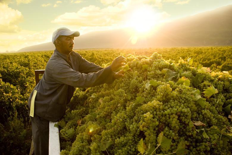 produzenten-suedafrika