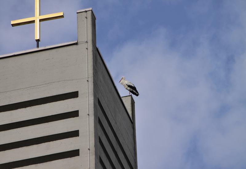 Der Storch auf dem Kirchturm